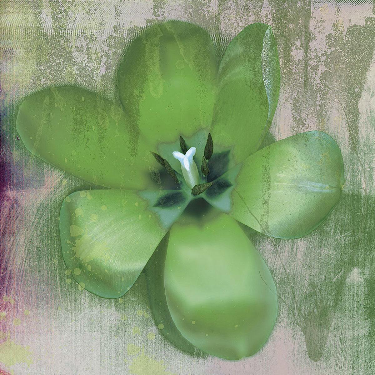 Tulip Fresco (green)