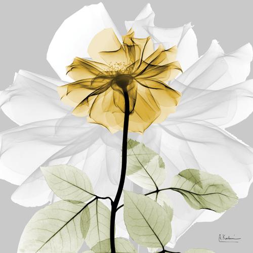 Rose in Gold II
