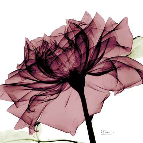 Chiant Rose