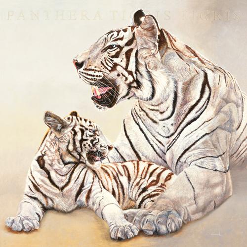 Tigres blancs, mere et fille