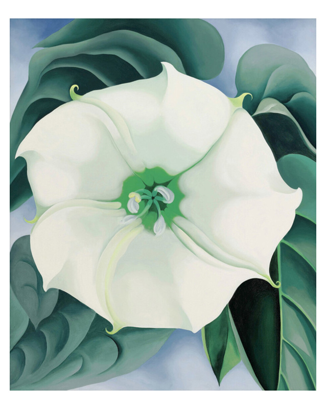 Jimson Weed-White Flower No.1. 1932