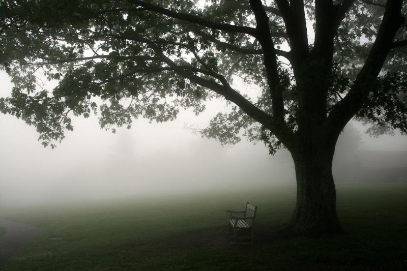 Misty Bench