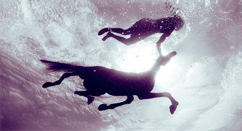 Creature Seahorse III