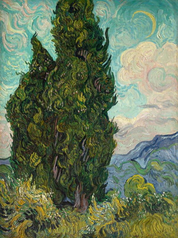 Cypresses I