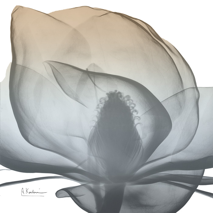 Magnolia Earthy Beauty New