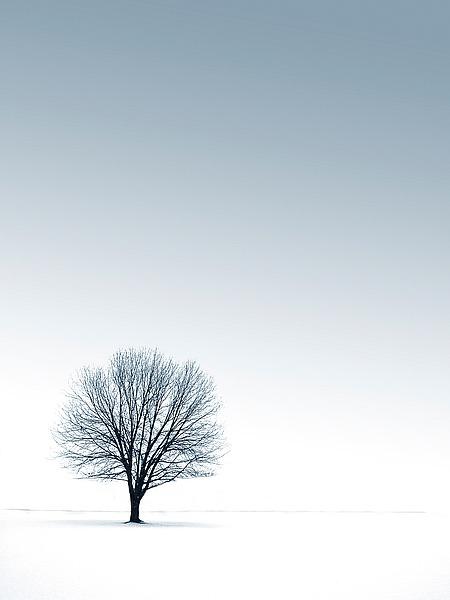Tree in Winterscape