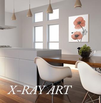 신비로운 X-ray ART