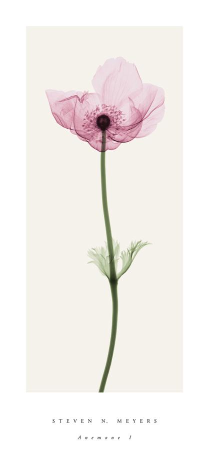 Anemone I (small)