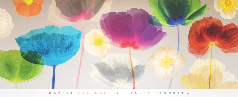 Poppy Panorama - Ovz