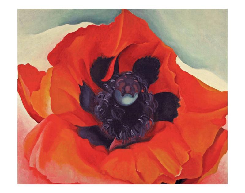 Red Poppy, 1928