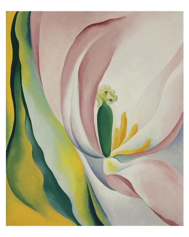 Pink Tulip, 1926