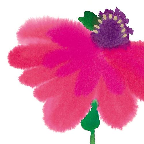 Blooming (pink)