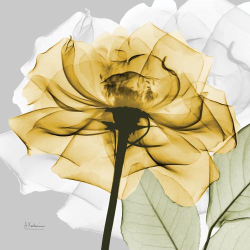 Rose in Gold IV