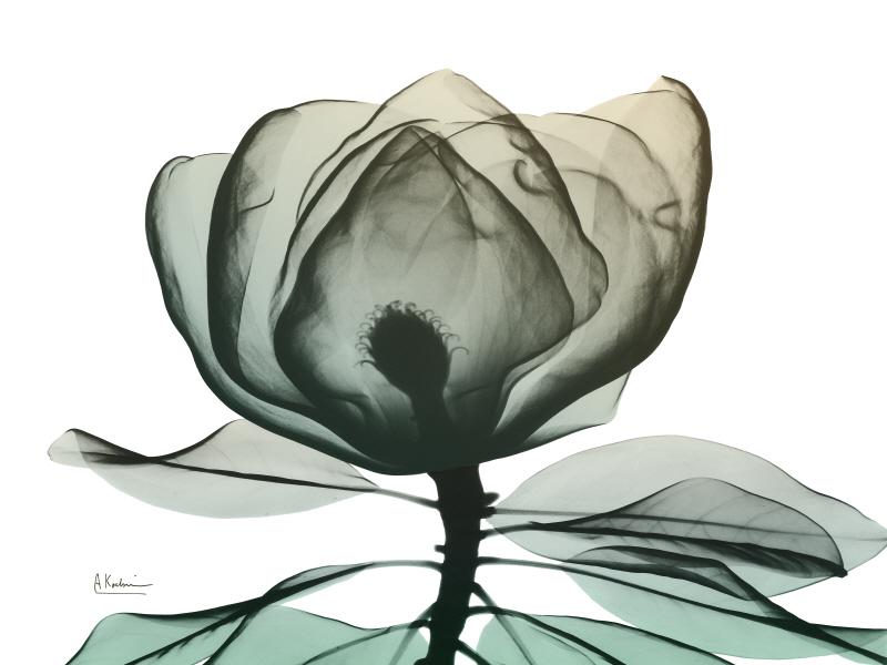 Emerald Magnolia I