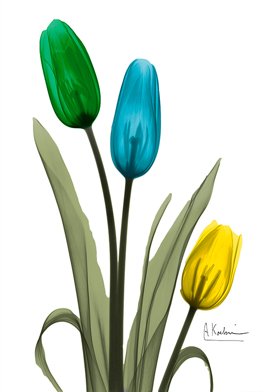 Jeweled Tulip Trio Ⅰ