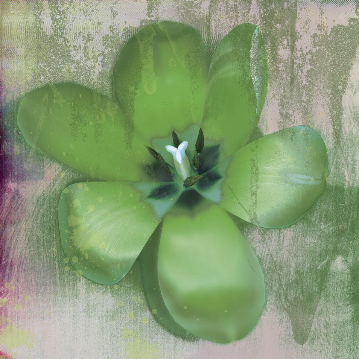 Tulip Fresco (green)