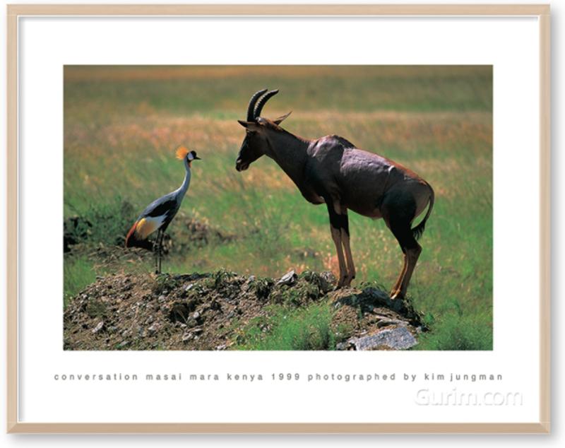 conversation (masai mara kenya 1999)