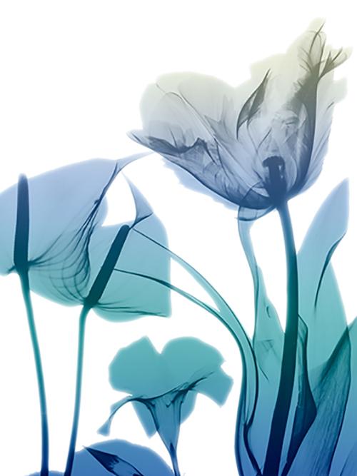 Morning Bloom II