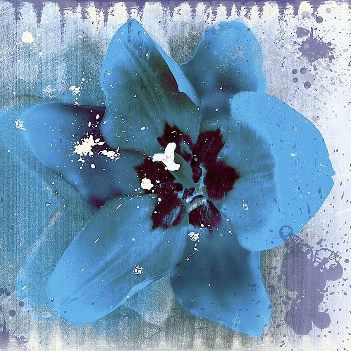 Tulip Fresco (blue)