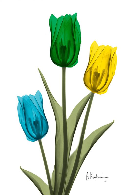 Jeweled Tulip Trio Ⅱ