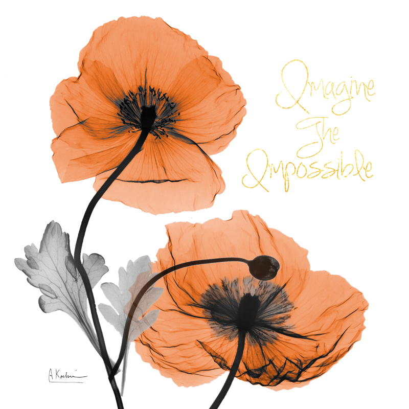 Impossible Iceland Poppy