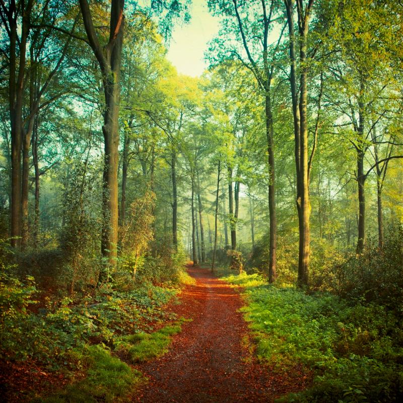 Sunday Morning Walk