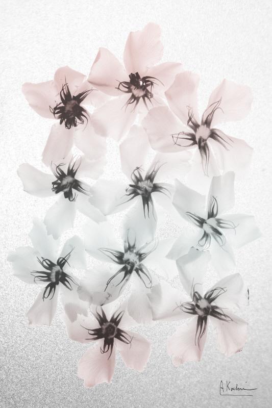 Oleander Fantasy I