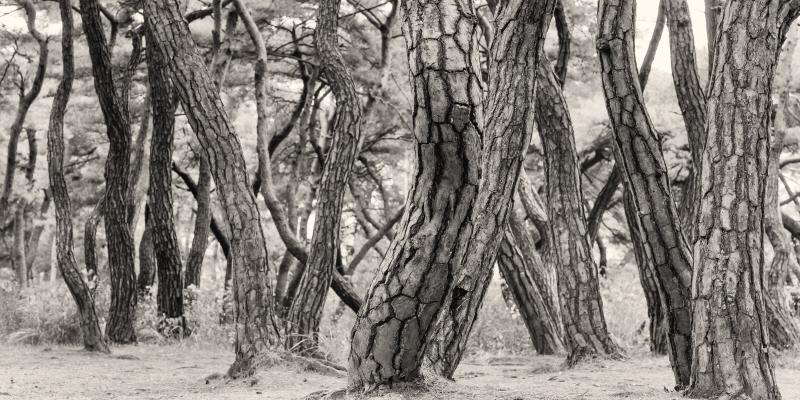 나에게 다가온 소나무 시즌5.5 (7)