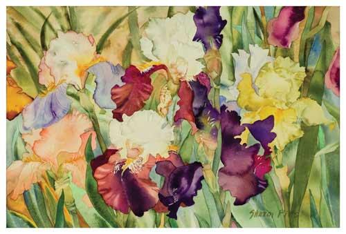 Elegant Irises