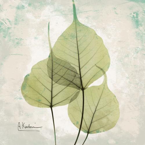 Bo Tree Agedstone