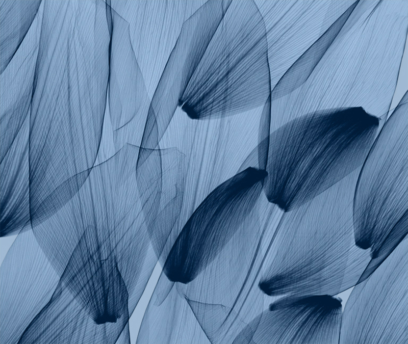Tulip Petals, Blue