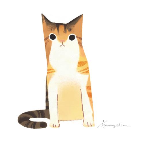 3colored cat