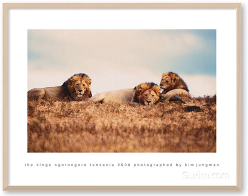 the kings (ngorongoro tanzania 2000)