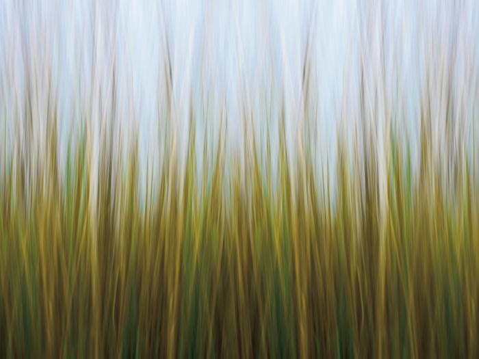 Seagrass Canvas