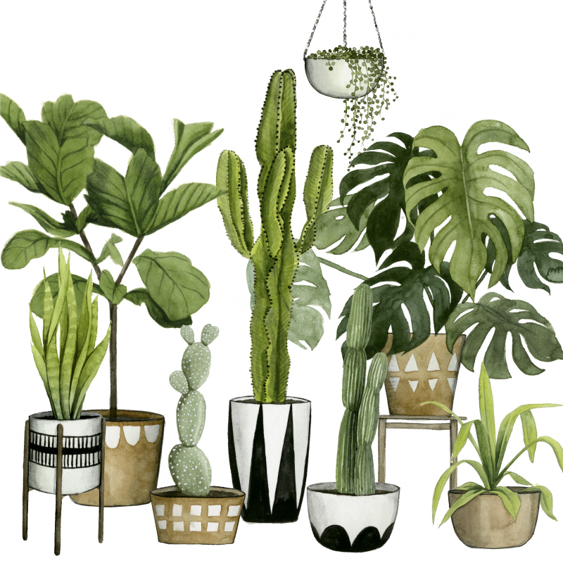 Plant Haven I