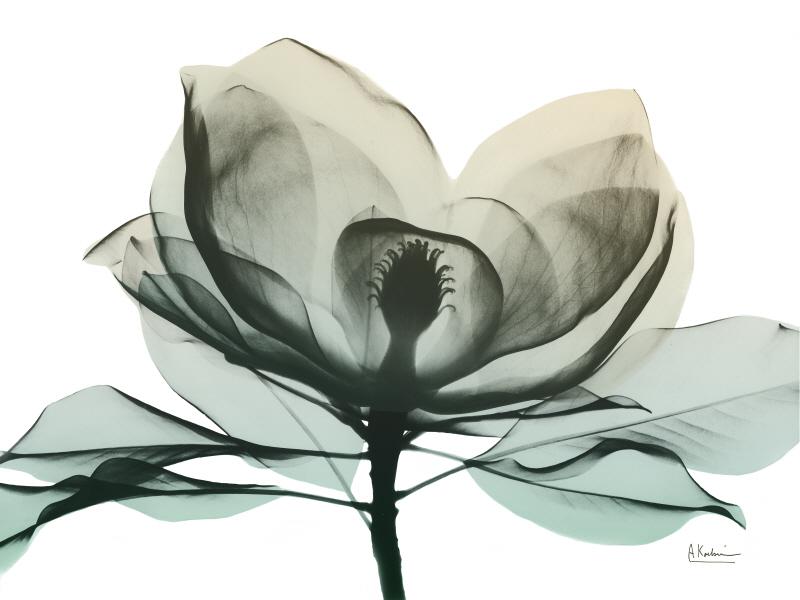 Emerald Magnolia II