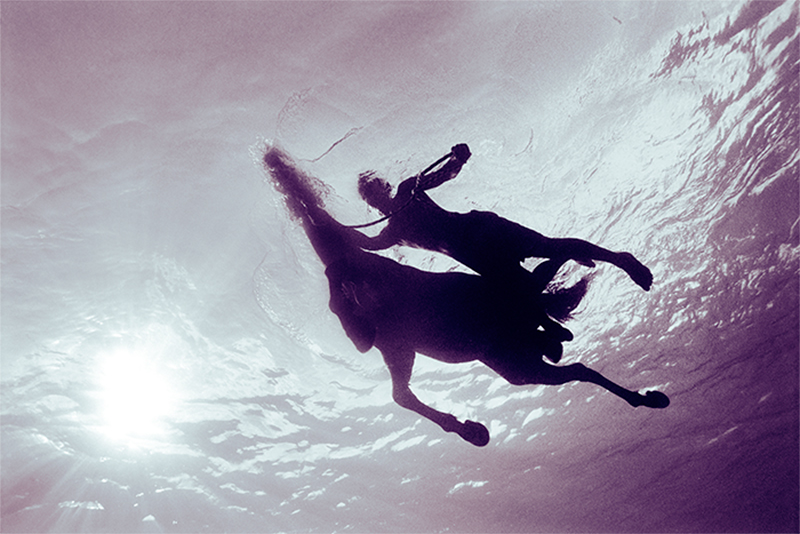 Creature Seahorse II