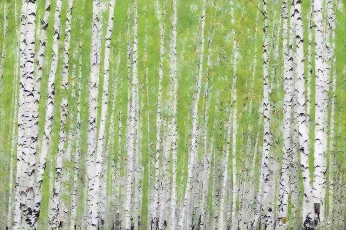 Evergreen Timber