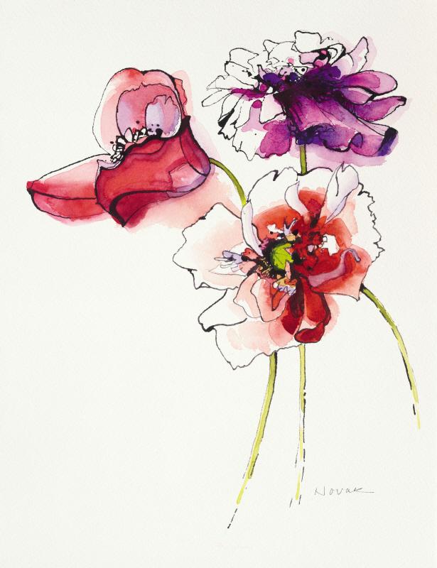 Three Somniferums Poppies