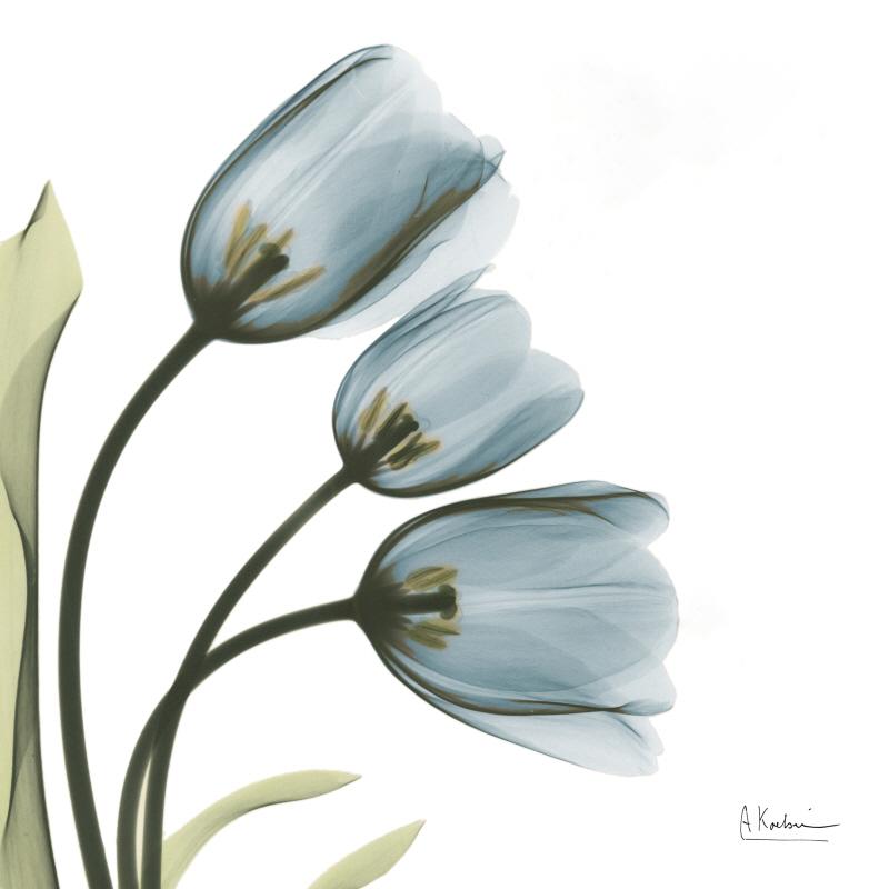 Tulips Faith