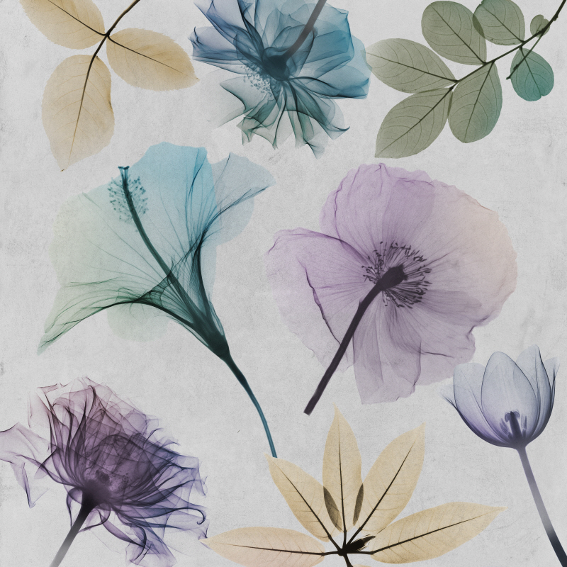 Floral Collage II