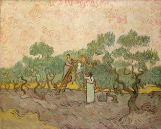 Women Picking Olives