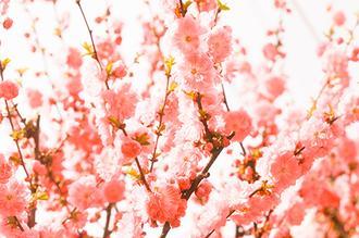 소녀의 꽃