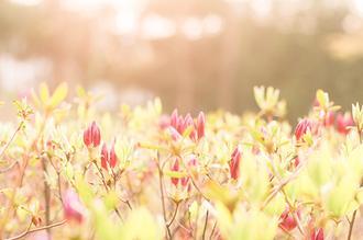 봄의 시작