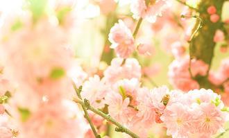 따스한 봄
