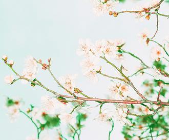 봄을 그리다