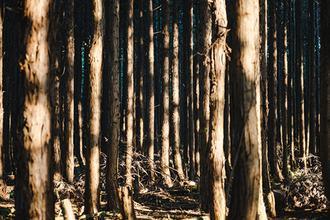 제주의 이름 모를 숲