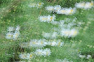 꽃들은 다 아름답다 IV