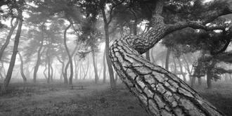 나에게 다가온 소나무 16