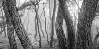 나에게 다가온 소나무 시즌5.5 (3)